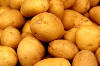 yukon gold bulves