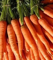 kaip islaikyti morkas per ziema