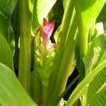 ciberzoles ziedas