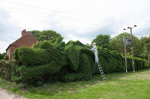 dragon-hedge-1-gyvatvore-drakonas