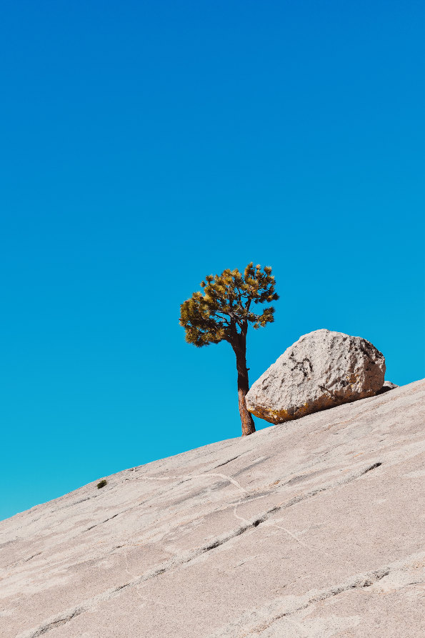 medis akmuo